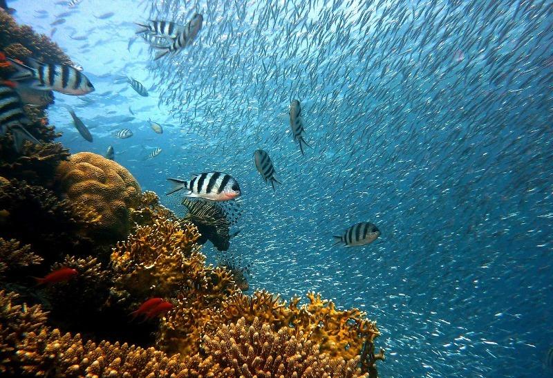 Los Roques Diving