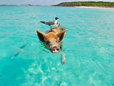 Caribbean fishing spot Bahamas